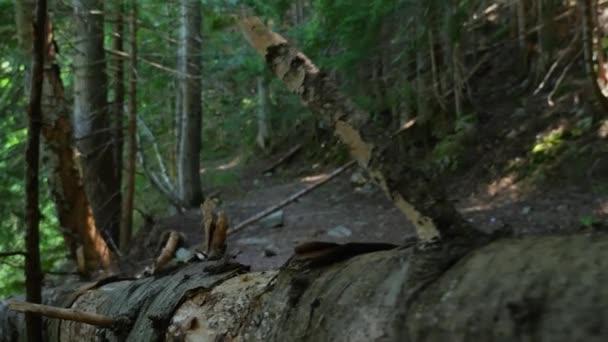 Moving along a fallen tree