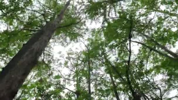 Intoxicated Hallucinations In A Turning Forest