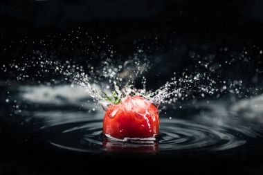 Fresh tomato falling in water with splash isolated on black background stock vector