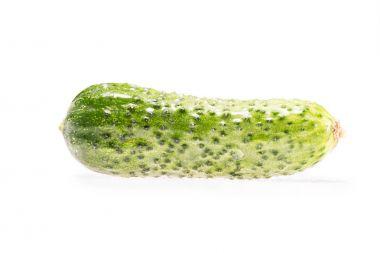 ripe fresh organic cucumbe