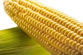 Fotografie syrové kukuřičné klásky