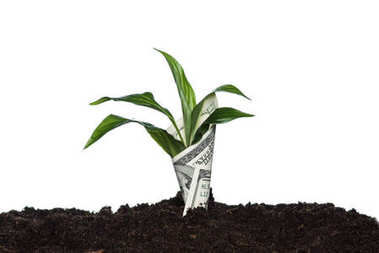 Plant covered with dollar