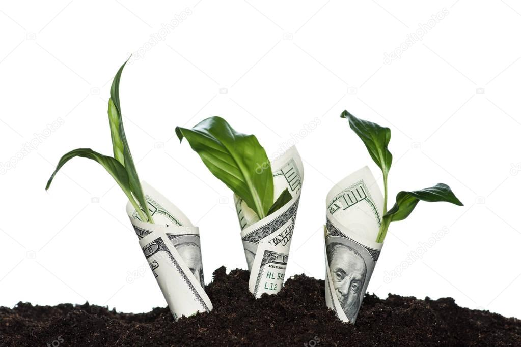 plants covered with dollar banknotes