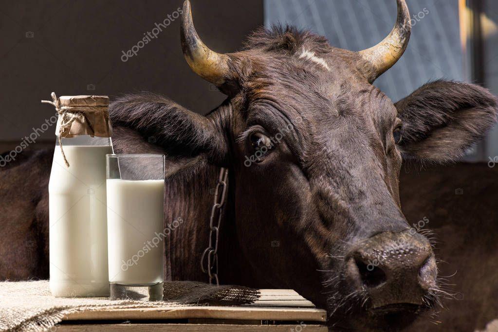 Корова и молоко в стекле — Стоковое фото © VadimVasenin ...