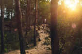 Photo Footpath in forest at sunset