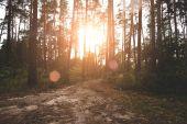 východ slunce v lese