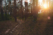 Fotografie Wald