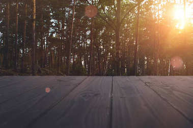 Summer forest at sunset