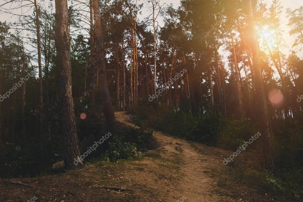 Footpath in summer forest