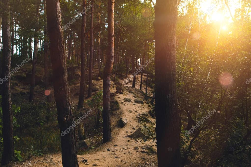 Footpath in forest at sunset