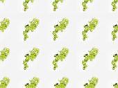 chmel se zelenými listy
