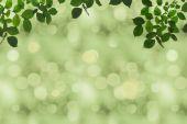 zelené listí a bokeh
