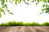 Fotografie zelené listy, drnu a Dřevěná prkna