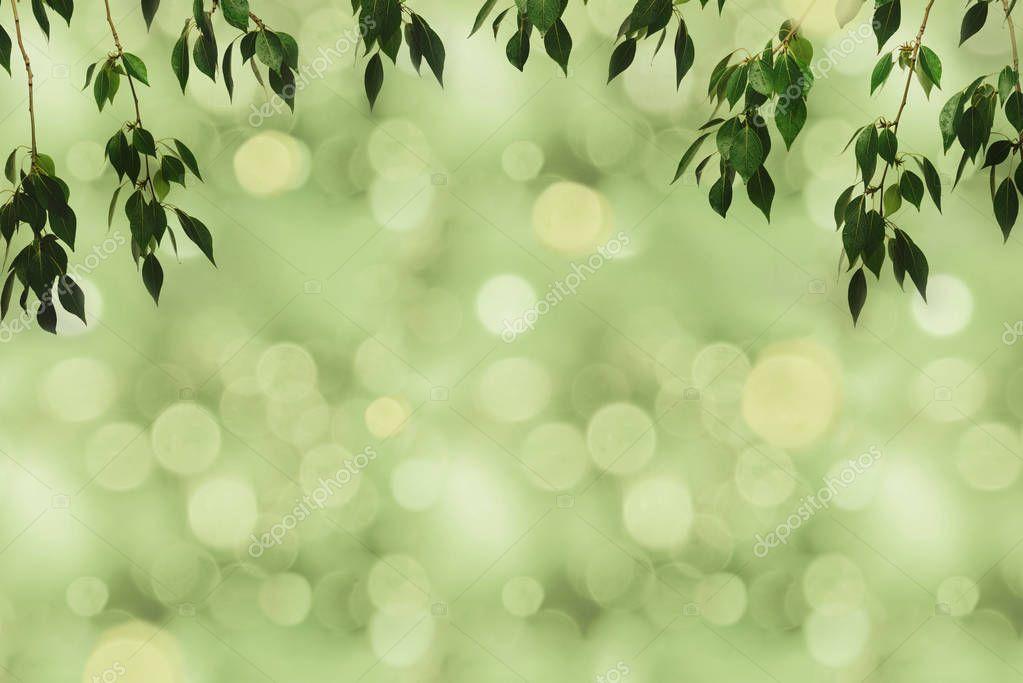 green foliage and bokeh