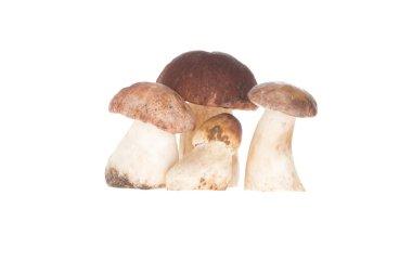 Four porcini mushrooms