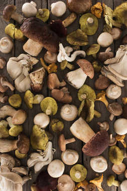 Different types of mushrooms on wooden table