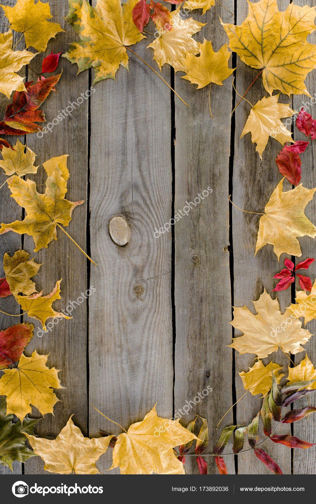 marco de hojas de otoño — Fotos de Stock © VadimVasenin #173892036