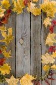 podzimní listí rám