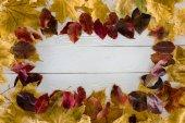 Rámeček podzimních listů