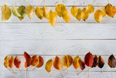 autumn leaves on wooden surface