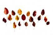 colored dark autumn leaves