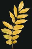 větvička s žluté podzimní listí