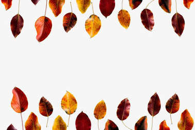 Top view of colored autumn leaves isolated on white stock vector