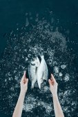 Fotografie oříznuté záběr lidských rukou drží desku s čerstvých organických dorado ryb na černém pozadí