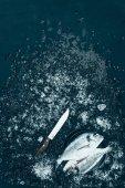 Fotografie pohled shora z čerstvých syrových ryb dorado na talíř a nožem s ledem na černém pozadí