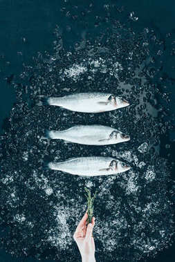 top view of human hand with herb and raw fresh sea bass fish with ice on black