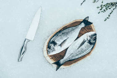 top view of fresh raw dorado fish on wooden board and knife on ice