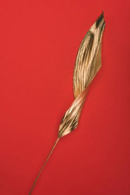 close up view of bright golden leaf isolated on red