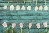 zarte blühende Tulpen über grünem Holzhintergrund mit Kopierraum
