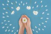 pohled shora oříznutého rukou s daisy, samostatný na modré