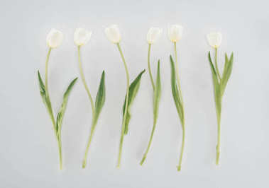 beautiful tulip flowers isolated on grey