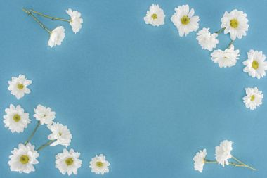 white chrysanthemum flowers frame isolated on blue
