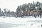 na rybníčku a stromy v zasněženém lese