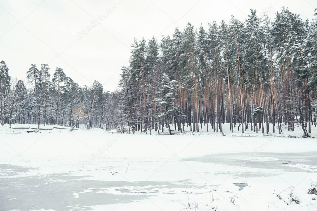 frozen pond and trees in snowy forest