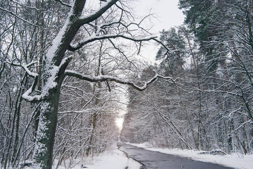 concrete road in beautiful snowy winter forest