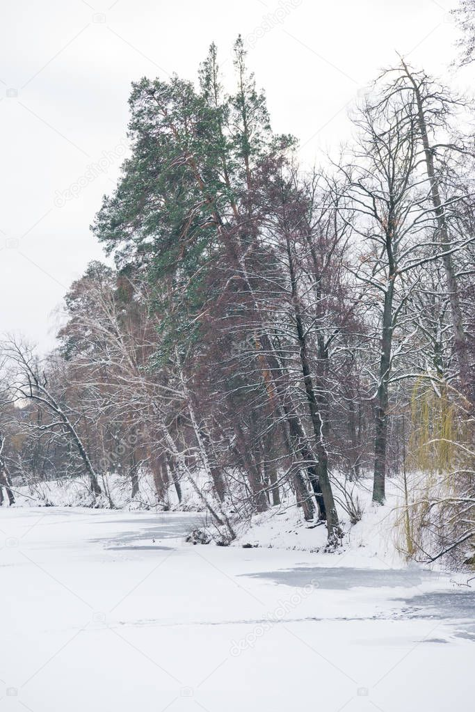 frozen lake and trees in snowy forest
