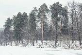 zamrzlou řeku a stromy v zasněženém parku
