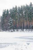 zamrzlé jezero a stromy v zasněženém parku