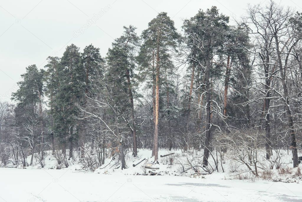 frozen river and trees in snowy park