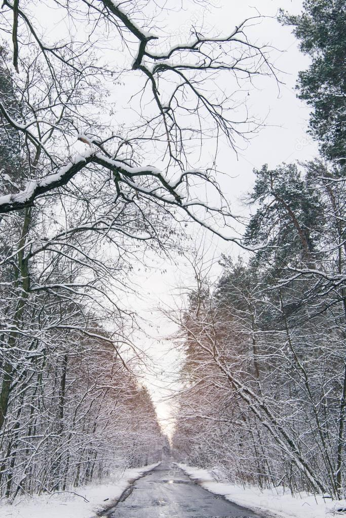sunset in frozen winter forest with snow