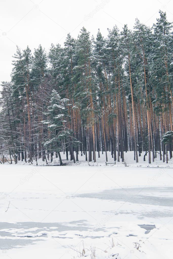 frozen lake and trees in snowy park