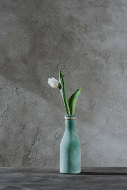 white spring tulip in blue vase on grey surface