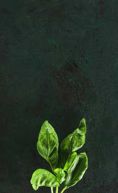 top view of fresh green basil leaves on black background