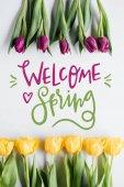 pohled shora žluté a fialové tulipány a přivítejte jaro nápis