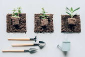 Photo top view of beautiful green plants in soil, gardening tools and watering can on grey