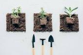 pohled shora krásných zelených rostlin v půdě a zahradnické nástroje na grey